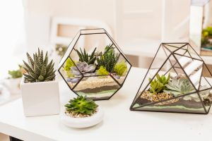 best terrarium plants