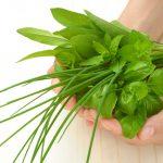 click and grow smart garden 3 indoor garden kit