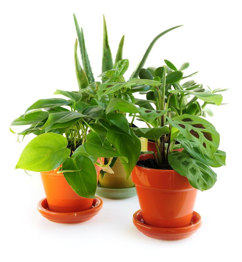 house plants hard to kill