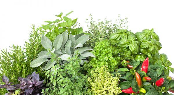 best indoor gardening kits