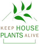 keep house plants alive