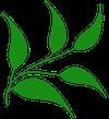 keep house plants alive icon