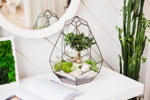 large glass terrarium