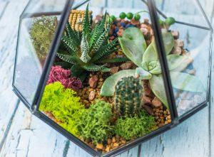 open terrarium plants