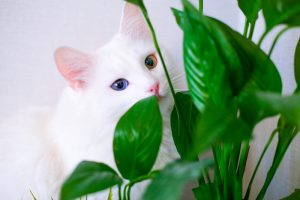 peace lily and cats
