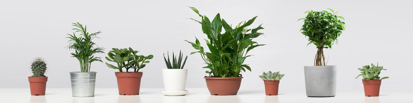 quick growing indoor plants