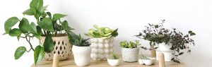 taking care of indoor plants