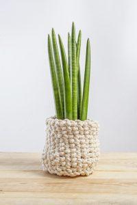 Sanseviera cylindrica snake plant varieties