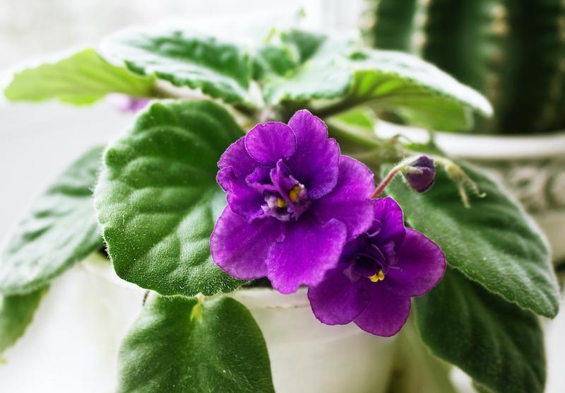 indoor smart garden for flowers