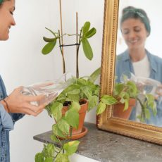 Watering House Plants – How To Get It Right