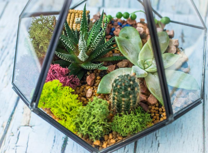 grow light for cactus