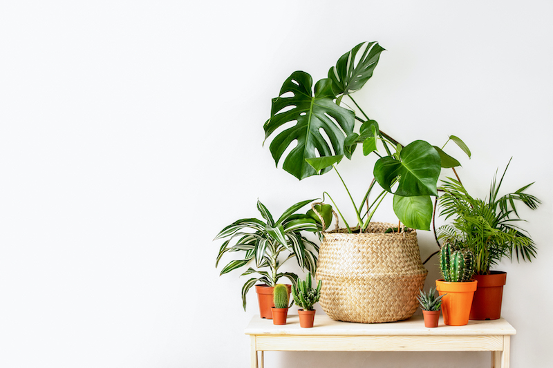 easy houseplants to keep alive