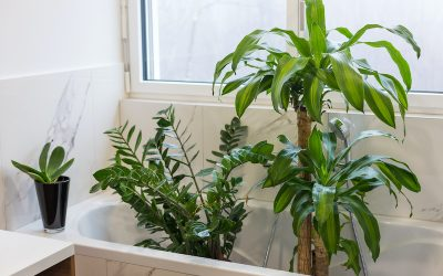 Wondering How To Water Plants While Away On Vacation?