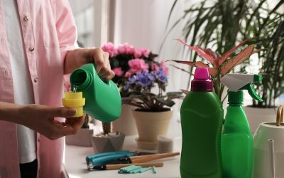The Best Fertilizer for Indoor Plants
